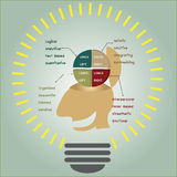 Brain function in light bulb Royalty Free Stock Images