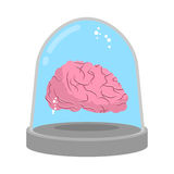 Brain in glass bell. Laboratory research. Study of mind. Stock Images