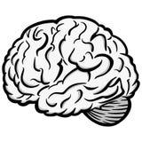 Brain Graphic Illustration Imágenes de archivo libres de regalías
