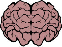Brain. Graphics showing the human brain Royalty Free Stock Image