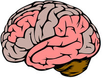 Brain. Graphics showing the human brain Stock Images