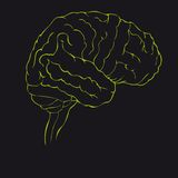 Brain in green side view Stock Images