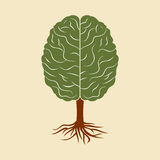 A brain growing in the shape of tree Stock Images