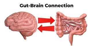 Brain-gut connection. Communication between these organs is important to understand the role of intestinal flora in the emergence