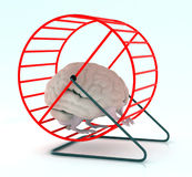 Brain in hamster wheel Royalty Free Stock Images