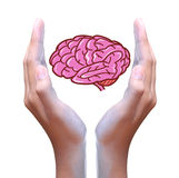 Brain in hand Stock Photo