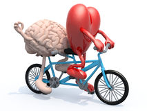 Brain and heart riding tandem bicycle. Human brain and heart with arms and legs riding tandem bicycle, 3d illustration stock illustration