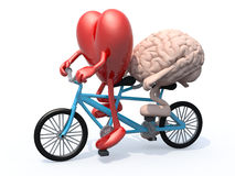 Brain and heart riding tandem bicycle Royalty Free Stock Image