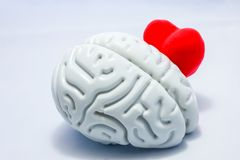Brain and heart on a white background. Heart shape peeps or hiding behind the anatomical shape of the brain. The brain protects th. E heart against the negative stock photo