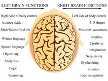 Brain hemisphere functions. Vector illustration of human brain's hemisphere functions Stock Images