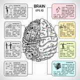 Brain hemispheres sketch infographic Royalty Free Stock Photos
