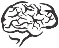 Brain high res Stock Photos