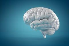 Brain Stock Photography