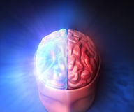 Brain. Human brain with glow and light Royalty Free Stock Photo