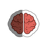 Brain human isolated icon Stock Photo