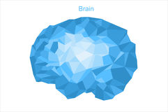 Brain. The human brain is represented as edges. You can use any design. Vector image. All elements on layers Stock Photography