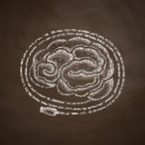 Brain icon. Hand drawn vector illustration. Chalkboard Design Royalty Free Stock Photo