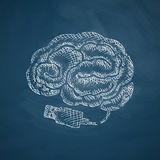 Brain icon. Hand drawn vector illustration. Chalkboard Design Royalty Free Stock Image