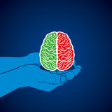 Brain icon in hand  Stock Images