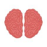 Brain icon. Thinking  design. Vector graphic Stock Photos