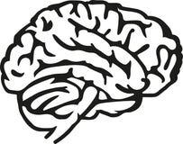 Brain icon vector. Brain icon thinking idea vector Royalty Free Stock Photography
