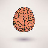 Brain icon. On the white background. Vector Stock Image
