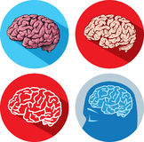 Brain icons Royalty Free Stock Image