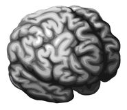 Brain illustration Royalty Free Stock Image