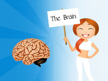 The brain Stock Photography