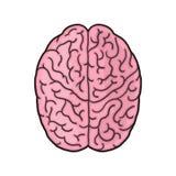 Brain illustration. Human brain cartoon Stock Images