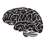 Brain 2. Illustration of human brain. Easy to edit vector format version vector illustration