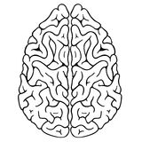 Brain. Illustration of a brain isolated on white stock illustration