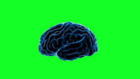 Brain impulses. Neuron system. Human anatomy. transferring pulses and generating information, Green screen
