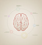 Brain infographic template Stock Photos