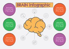 Brain infographic. Vector illustration decorative background design