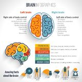 Brain inforgaphics set. Brain structure left analytical and right creative hemispheres infographics set vector illustration royalty free illustration