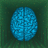 Brain inside digital matrix. Stock Photo