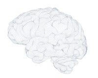 Brain isolated wireframe Stock Photo