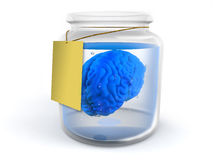 Brain in jar Stock Image