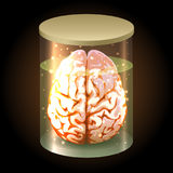 Brain in Jar Royalty Free Stock Photo