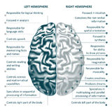 Brain left and right hemispheres infographics vector illustration. Brain left analytical and right creative hemispheres infographics vector illustration stock illustration
