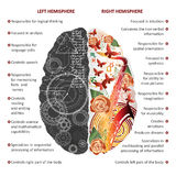 Brain left and right hemispheres infographics vector illustration. Brain left analytical and right creative hemispheres infographics vector illustration royalty free illustration