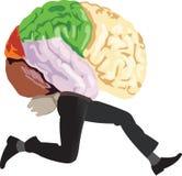 Brain with legs Stock Photo