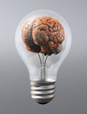 A brain into a light bulb Stock Images