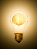 Brain light bulb lit Royalty Free Stock Photography