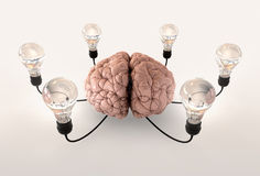 Brain And Lightbulb Imagination Royalty Free Stock Photography