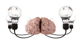 Brain And Lightbulb Imagination White Stock Photo