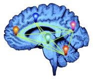 Brain Lightbulbs Ideas. Blue brain with lightbulbs connecting to each other vector illustration