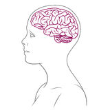 Brain line female Royalty Free Stock Photos