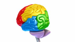Brain lobes in different colors isolated on white stock video footage